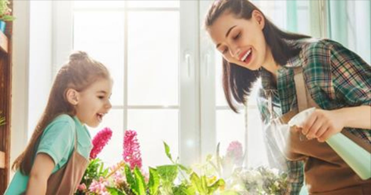 5 комнатных растений, которые принесут в твой дом счастье и удачу