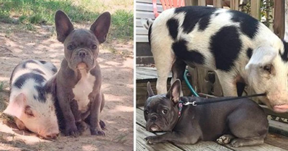 20 фотографий, как животные росли вместе: ДО и ПОСЛЕ
