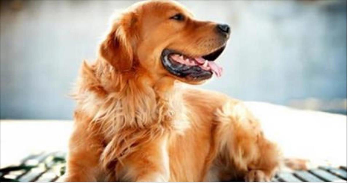 Какие будут 10 месяцев удачи Знаков Зодиака начиная с марта месяца расскажет гороскоп Желтой Собаки