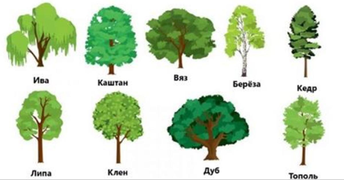 Выберите понравившееся дерево и получите предсказание на весь 2018 год!