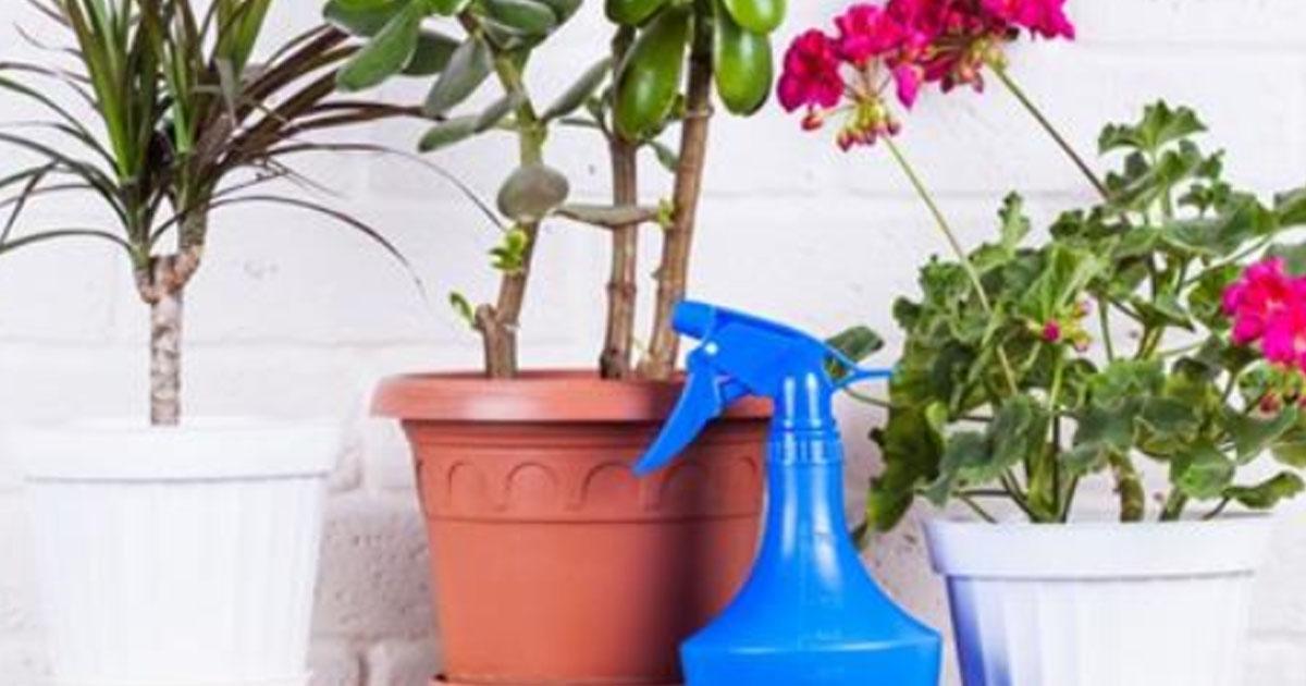 Флористы рекомендуют! 7 отличных способов как ускорить рост комнатных цветов