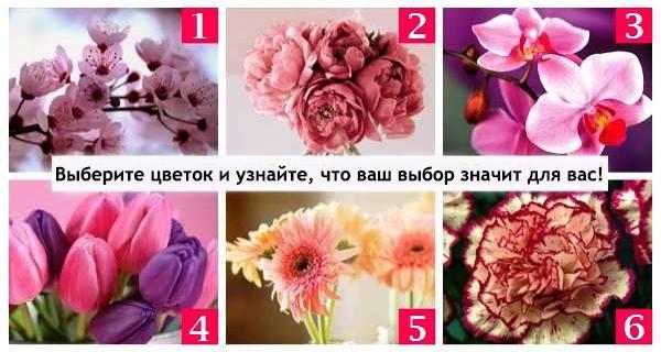 Выберите один из этих великолепных цветков и узнайте, что уготовила для Вас судьба