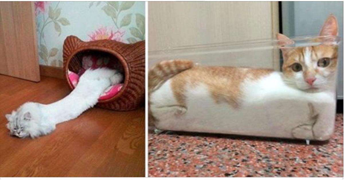 20 смешных фотографий кошек