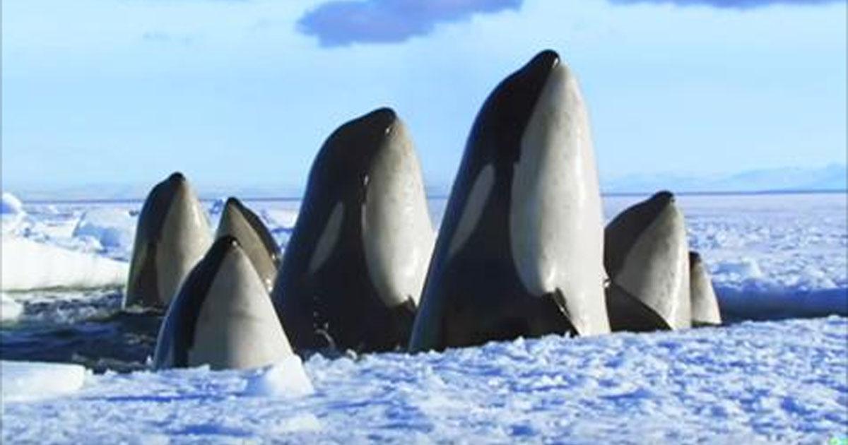 Невероятно красивое 2-минутное видео о дикой природе