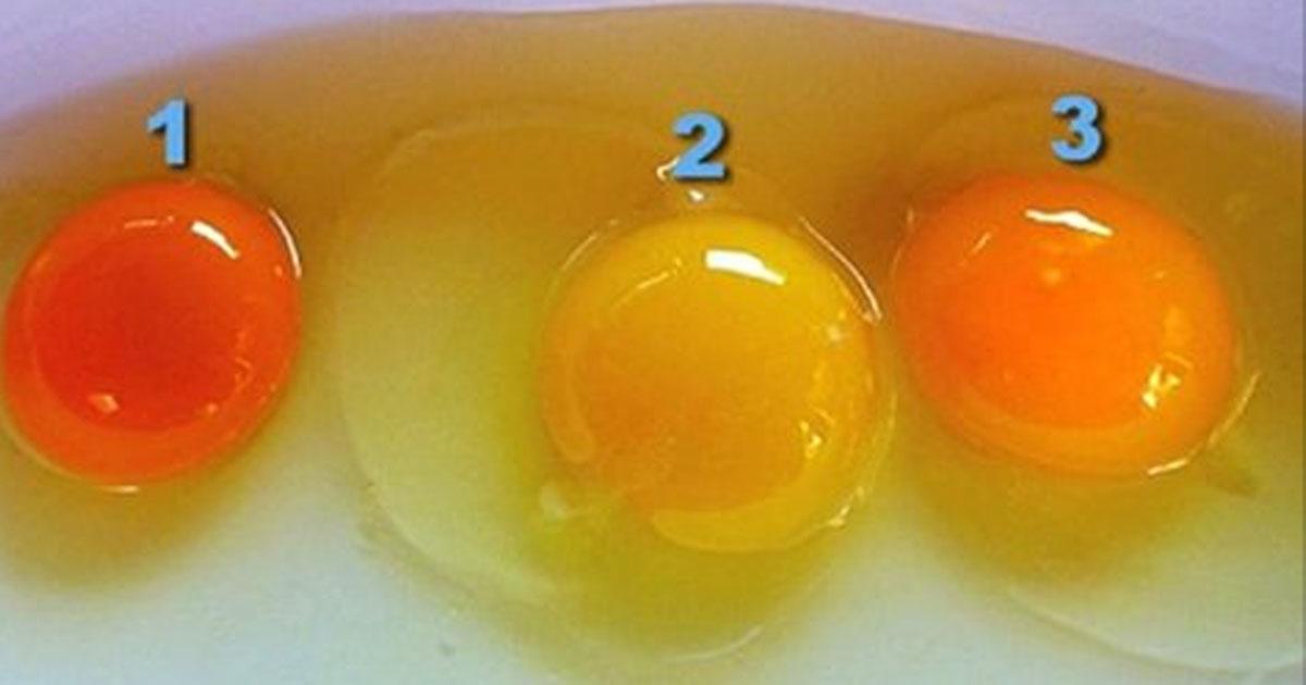 О том, как правильно выбрать яйца.
