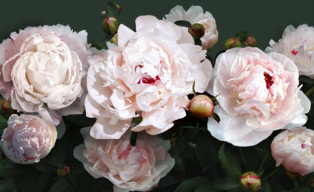 Любимые ваши цветы, расскажут какую женщину видят в вас мужчины