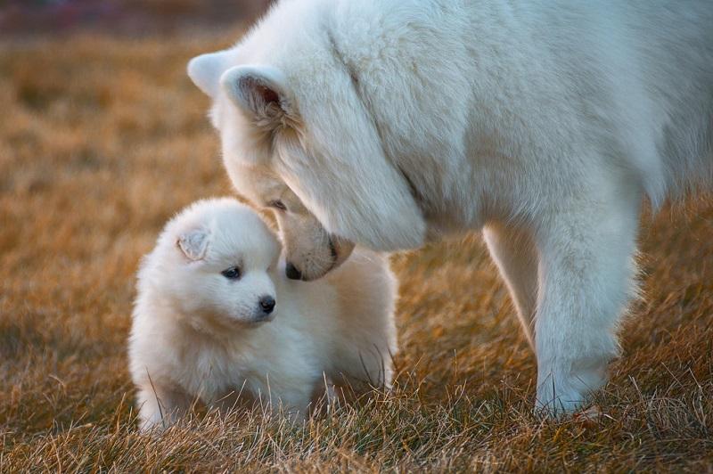 20 взрослых собак и их милые уменьшенные копии.