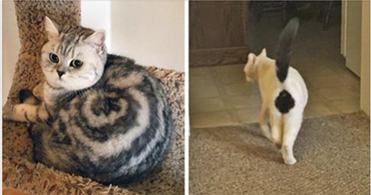 Природа рисует: самые удивительные кошачьи окрасы!