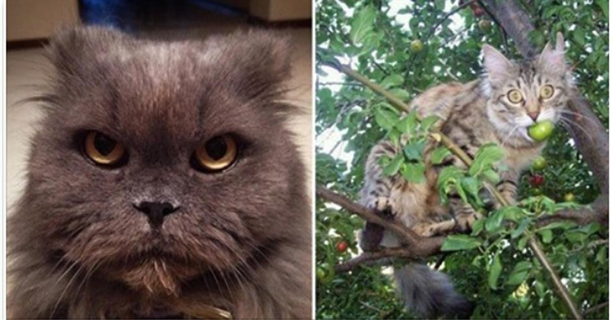 Разъяренные коты, которых забыли покормить