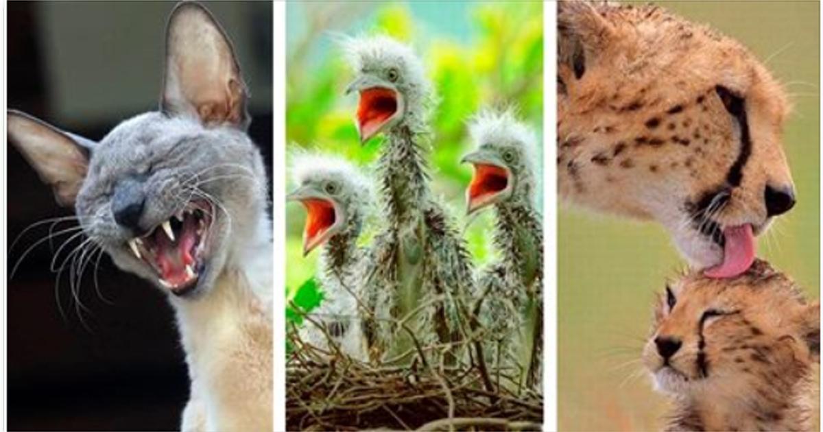 Отличная подборка фото из мира животных, вы только взгляните на их эмоции, не каждый человек столько выражает