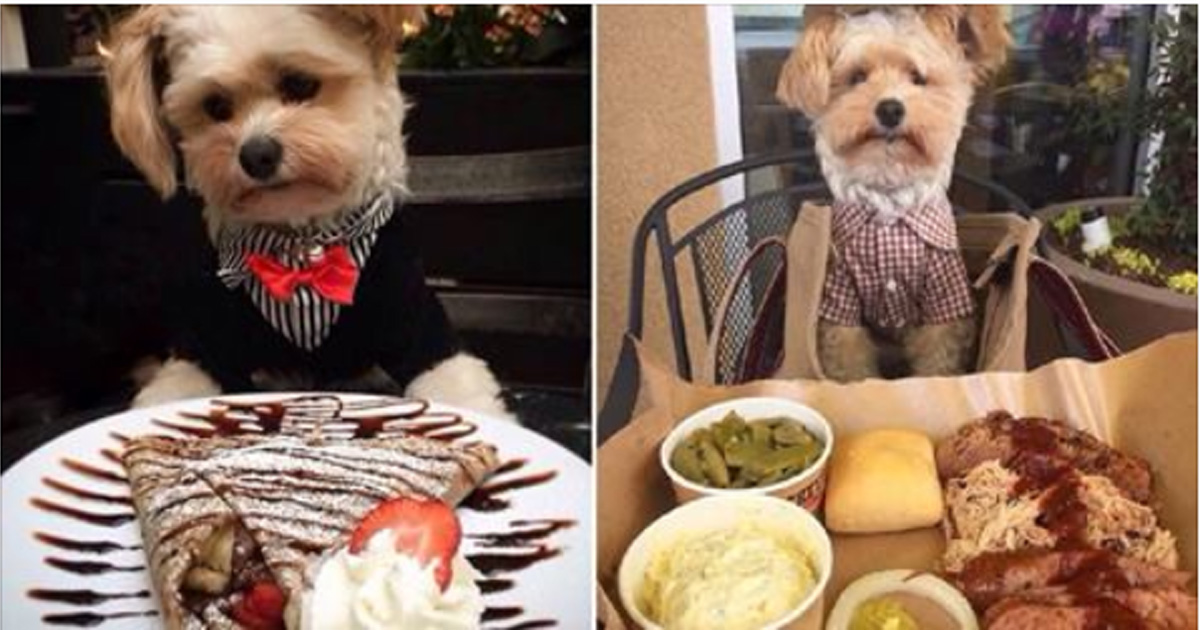 Попай — спасённая собака, чей Instagram сделал её звездой интернета