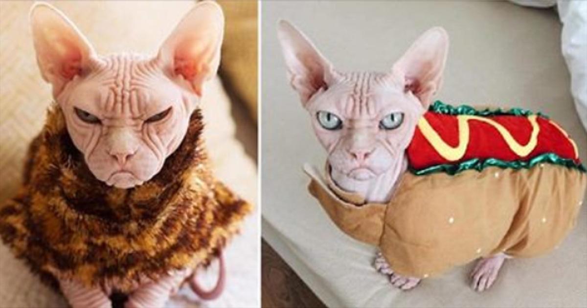 «Локи» – самый суровый кот в мире!