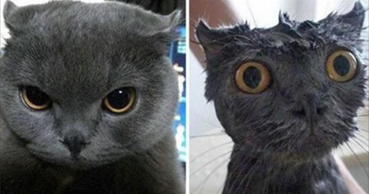 Фотографии котов до и после купания