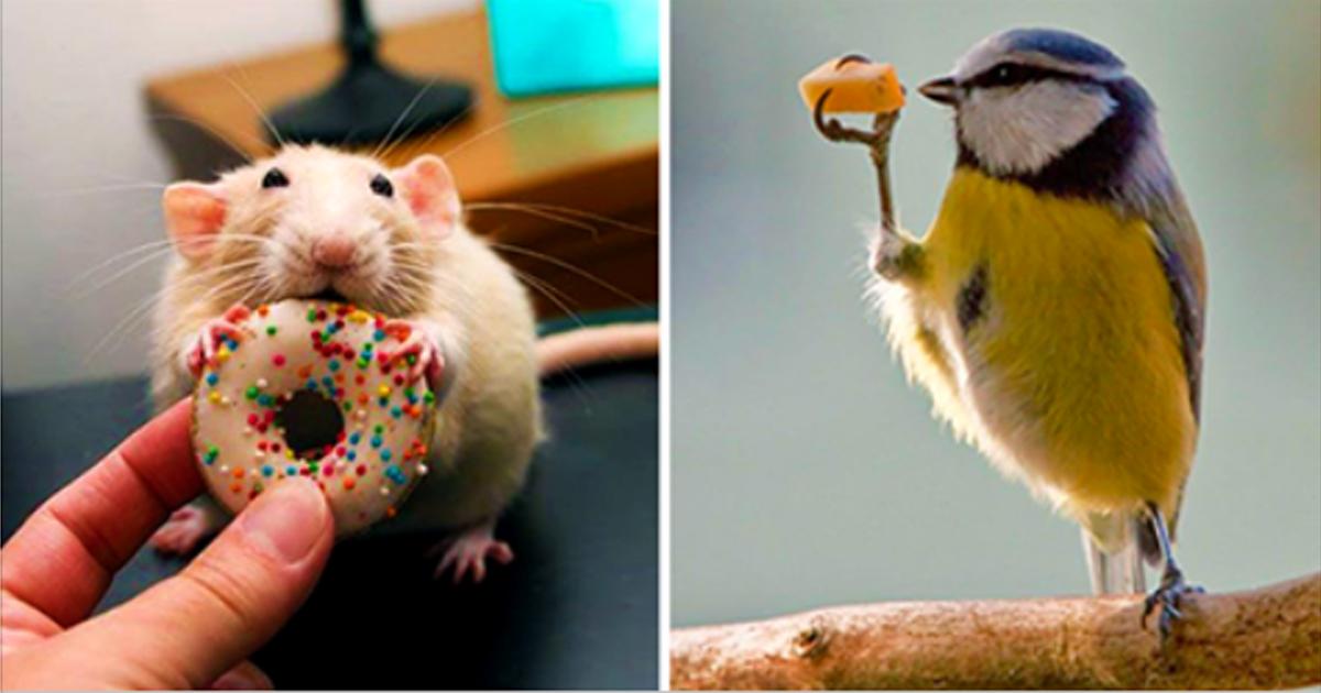 20 животных, которых застукали за поеданием вкусняшек!