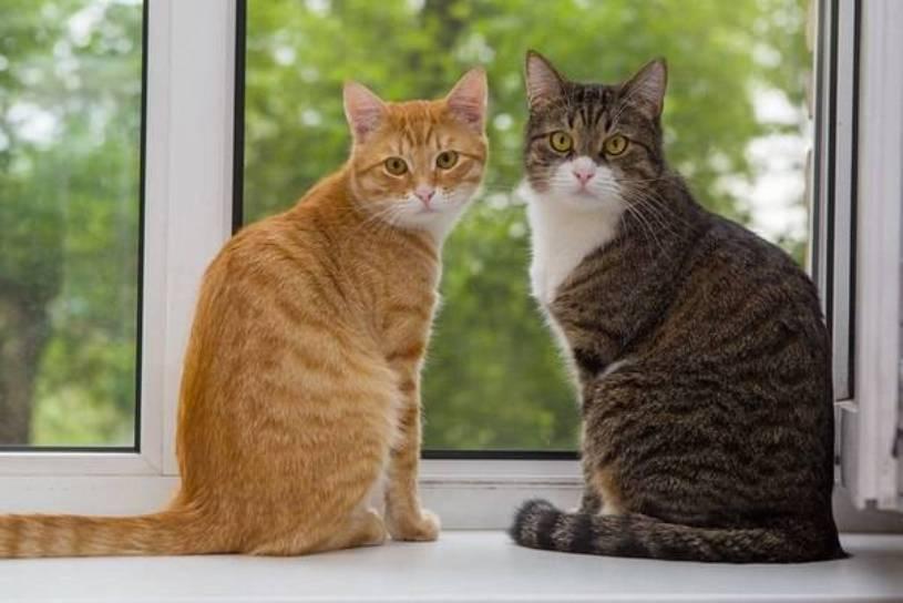20 доказательств того, что любовь хозяина творит с животными настоящие чудеса