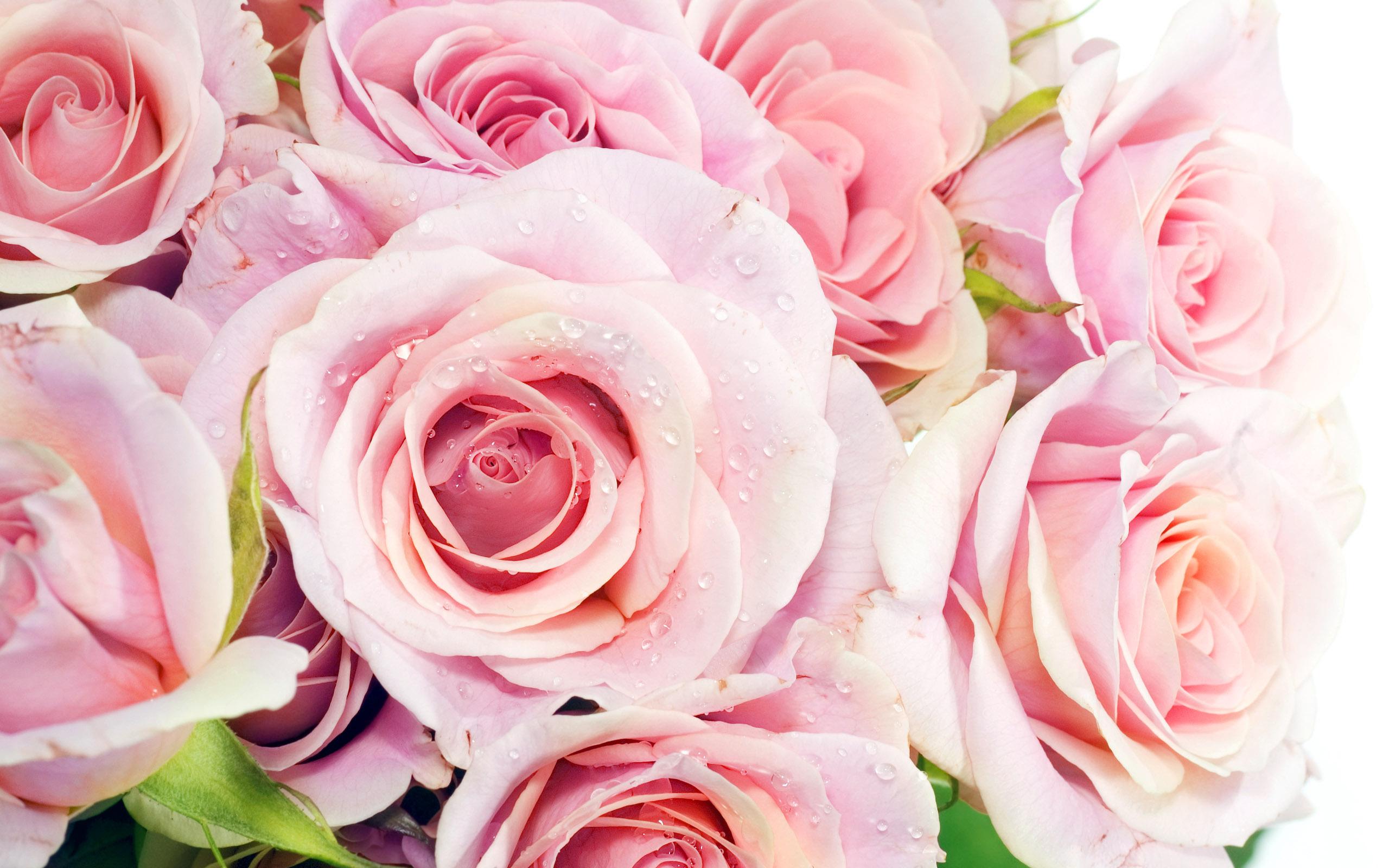Тест личности: Название какого цветка вы увидели первым может отражать множество аспектов вашей жизни и личности