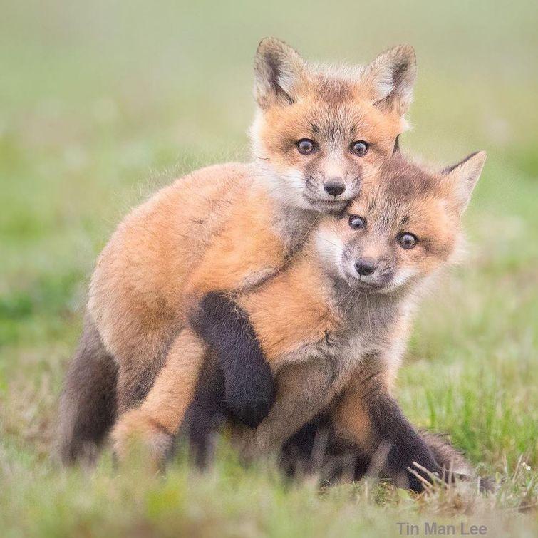 25 детёнышей диких животных, которые заставляют растаять от умиления