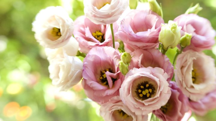 Эустома — цветок нежности и любви