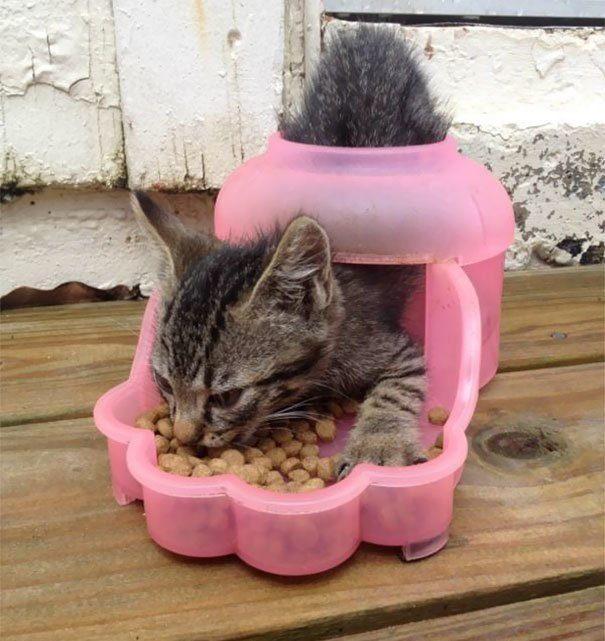 30 котов-идиотов, при виде которых невозможно не смеяться (27 фото + 4 гиф)
