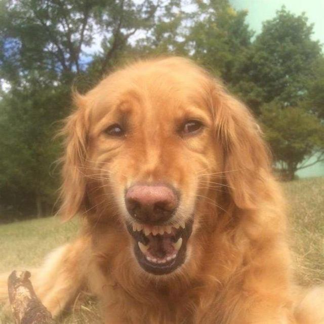 15 смешных собак, которые выглядят точь-в-точь как люди
