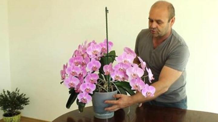 4 советы Алексея Горобея: как достичь максимального цветения орхидей (видео)