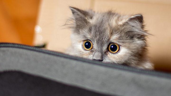 20 котиков, которые провинились и очень об этом сожалеют