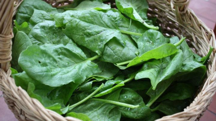 5 продуктов, в которых белка больше, чем в мясе
