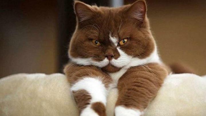 15 пунктов  кодекса домашнего кота