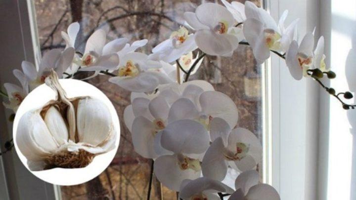 Как ухаживать з орхидеей в горшке