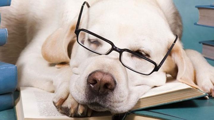 7 самых умных пород собак