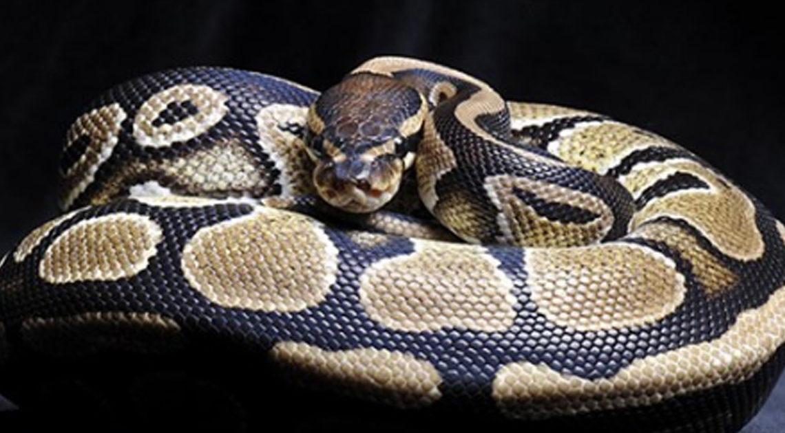 Поучительный рассказ о змее.
