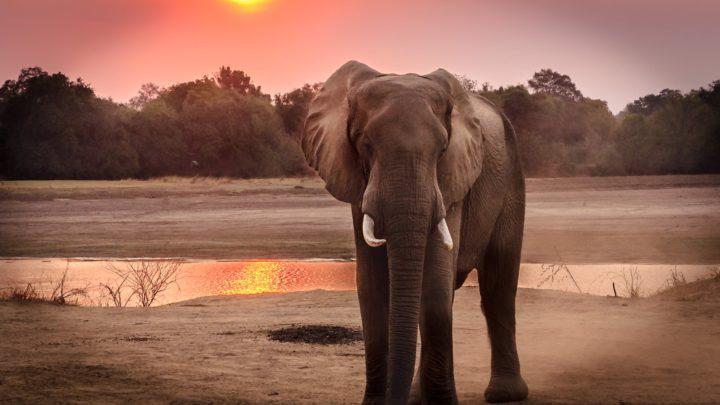 Туристов просят не кататься на слонах в Таиланде.