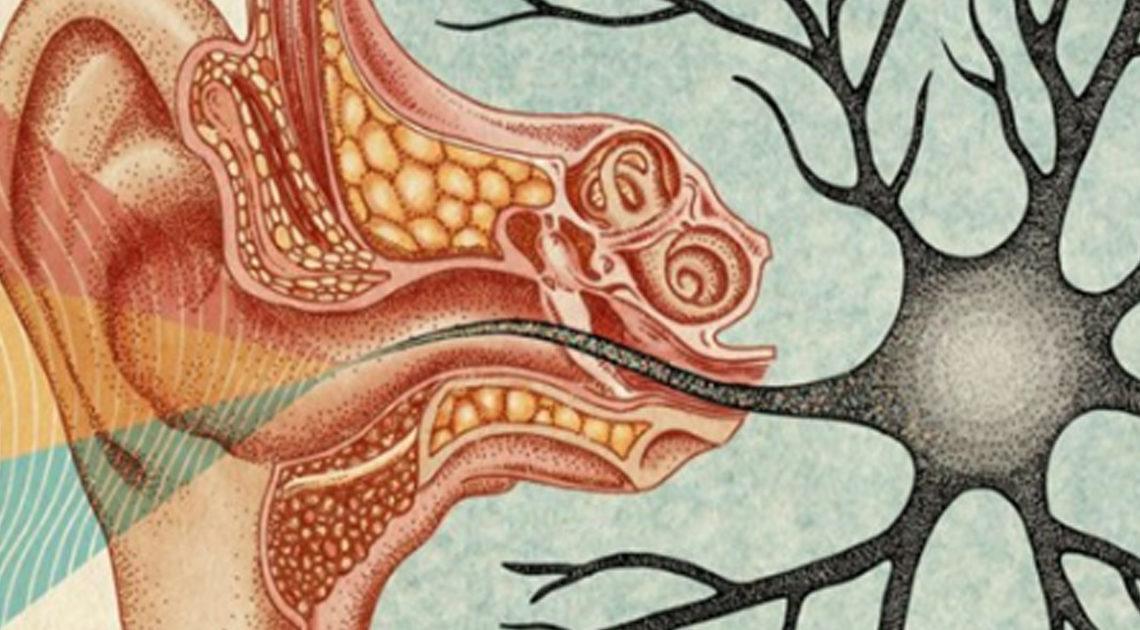 Наука говорит, что тишина жизненно важна для наших мозгов